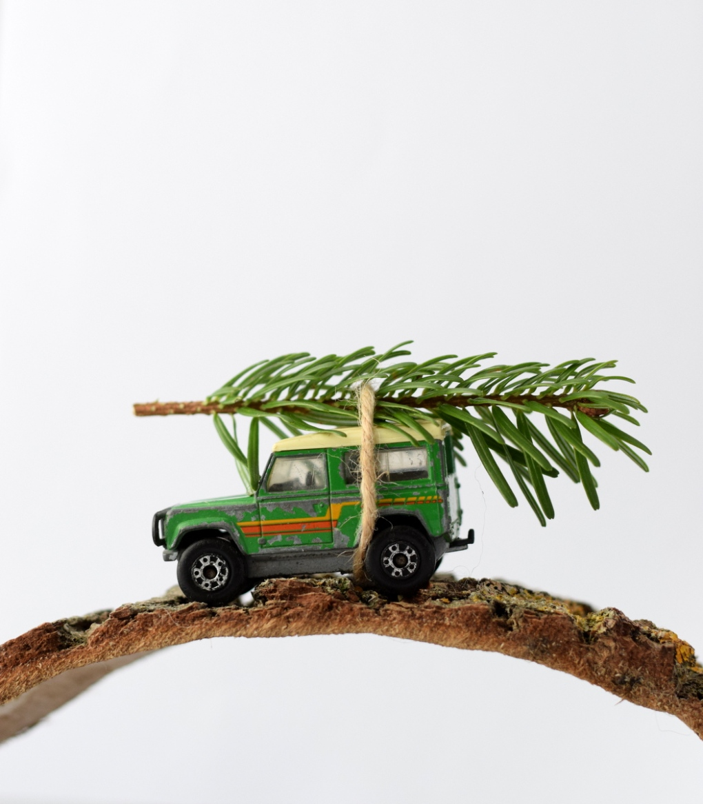Carrying home the Christmas Tree on a Land Rover