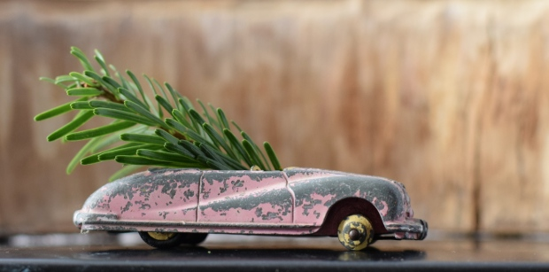 carry-home-the-christmas-tree-sports-car