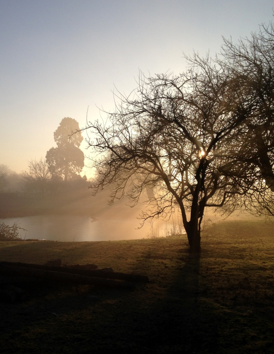 morning sun on foggy day