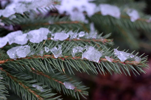 snow on Slamseys Christmas trees