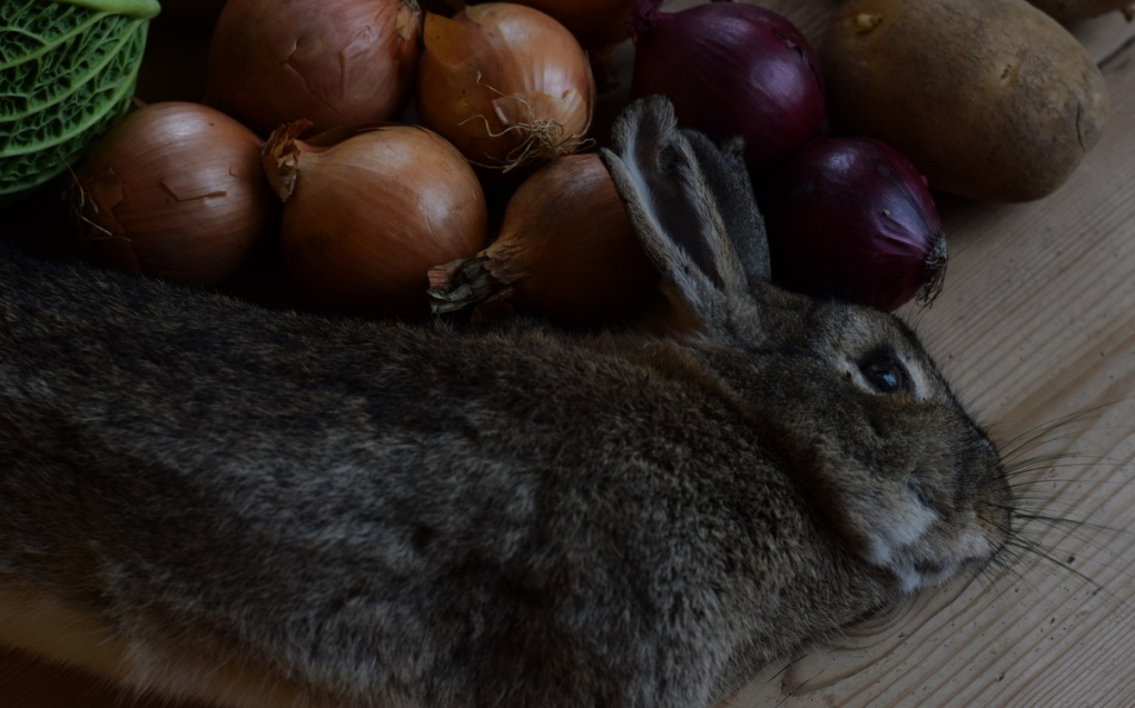 still life with rabbit and vegetables