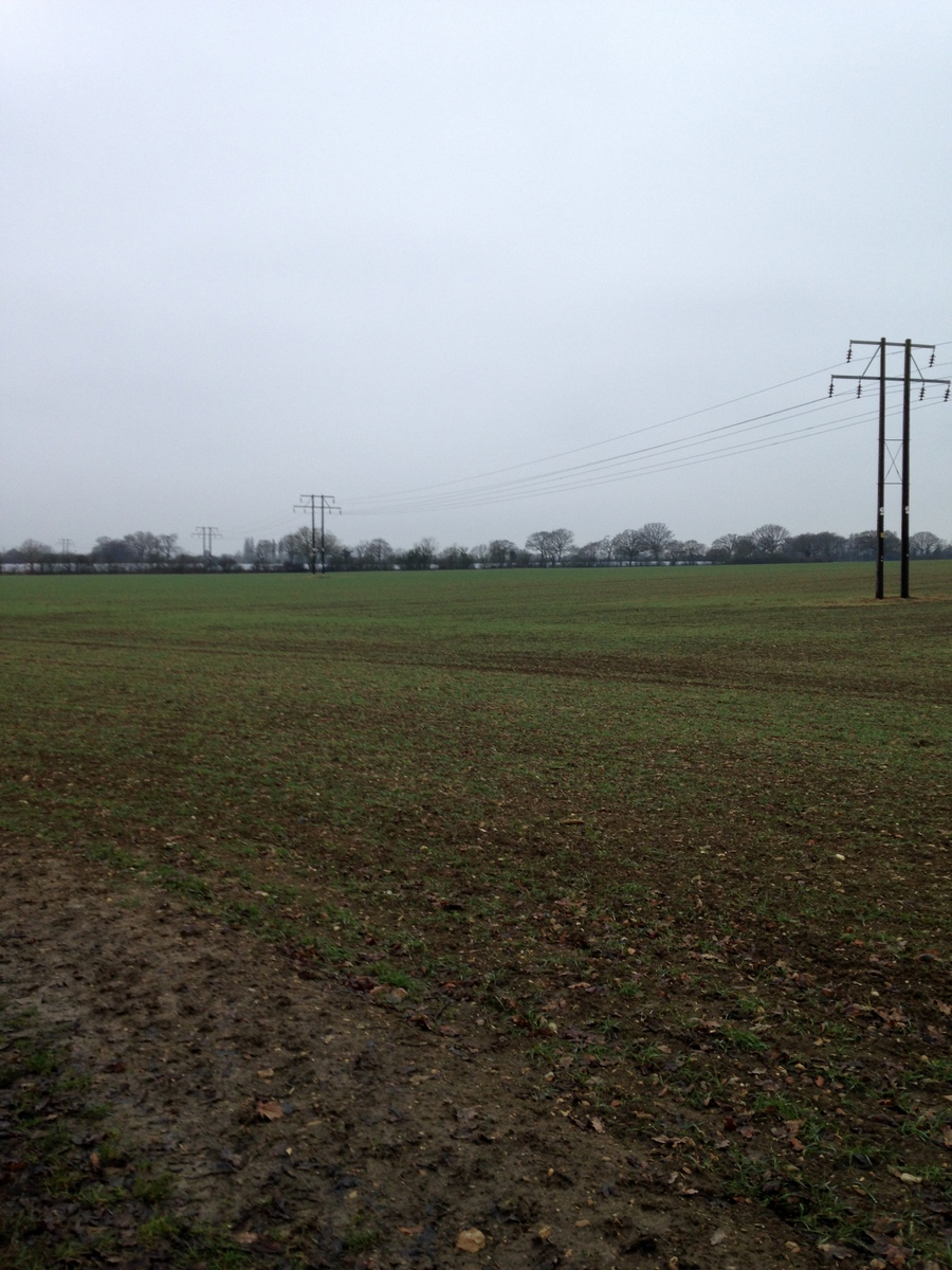 Wheat growing in The Ley