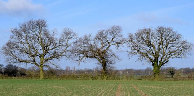 Little Forest Field in March