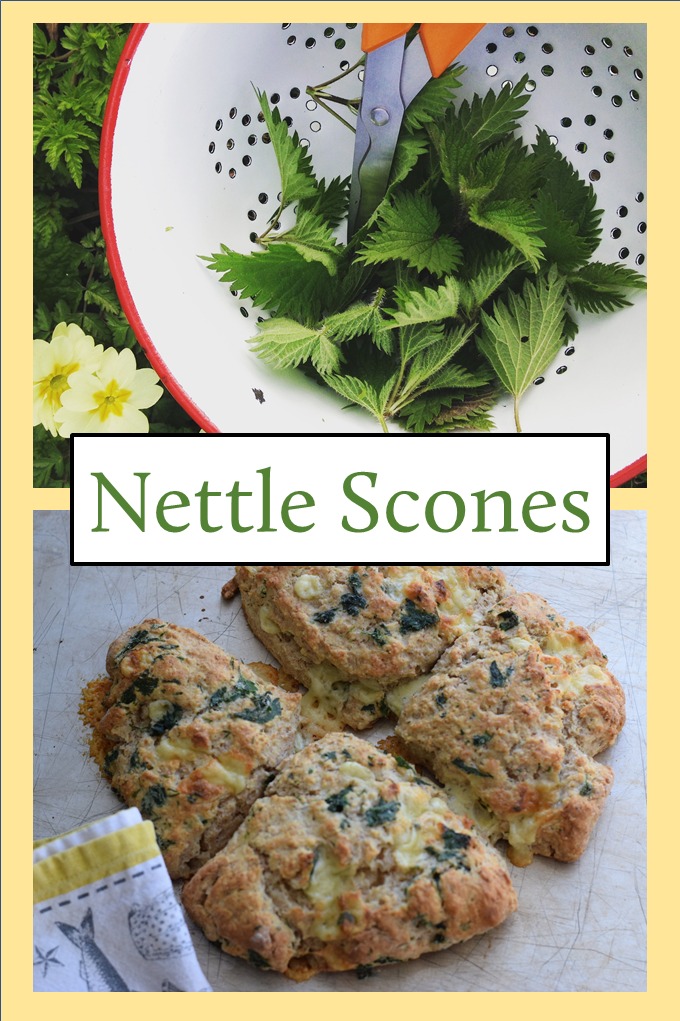 What do you do with a bag full of nettle leaves? Use this simple recipe to make a batch of delicious Cheese and Nettle Scones. Forage, cook, eat