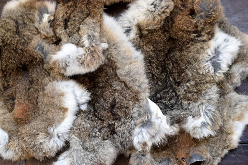 Rabbit Furs