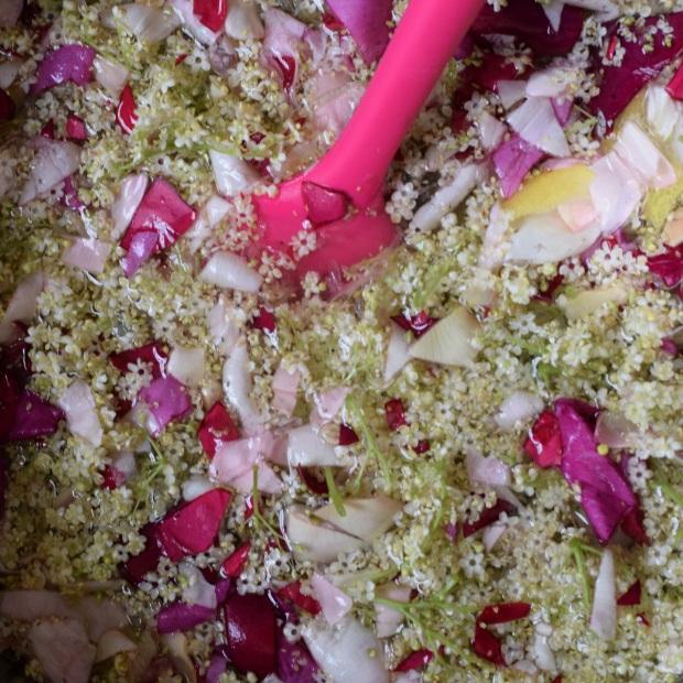 making elderflower and rose cordial