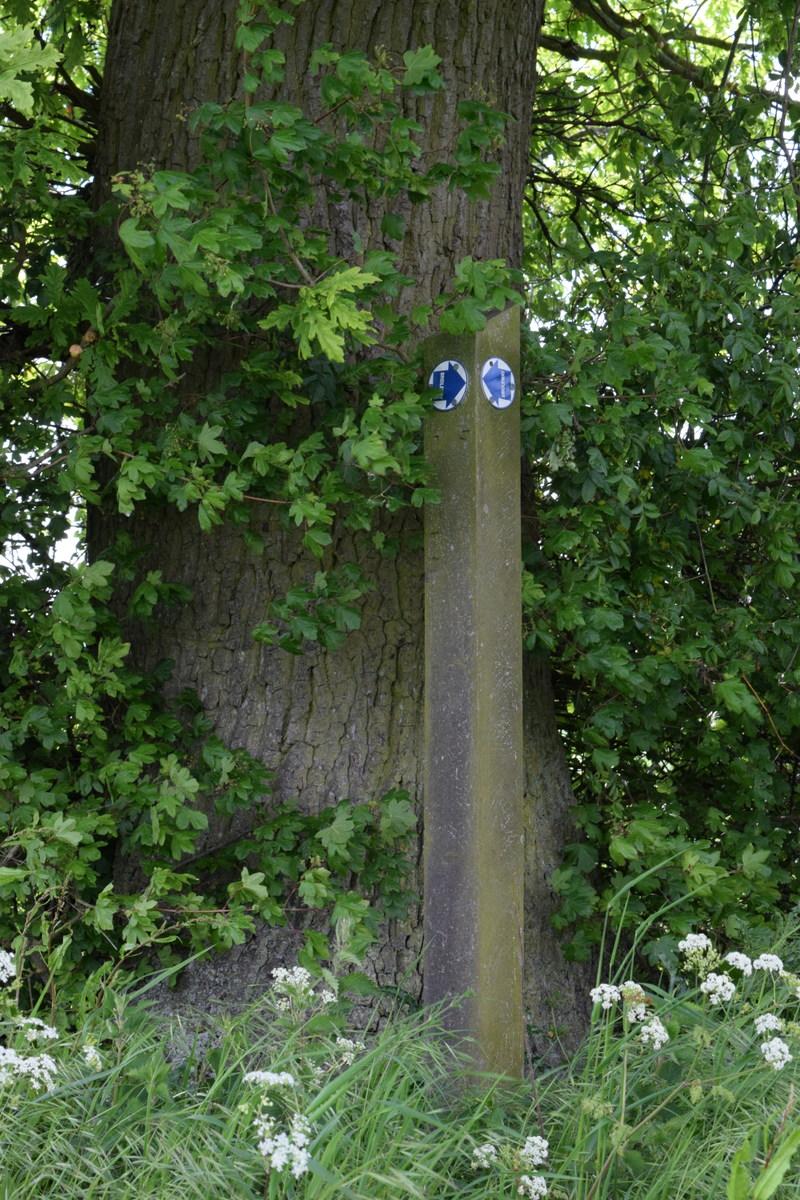 bridleway sign against tree