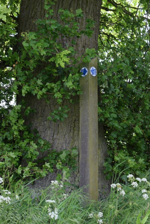 bridleway sign against tree