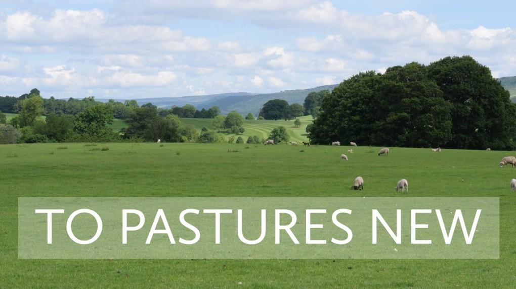Field of sheep