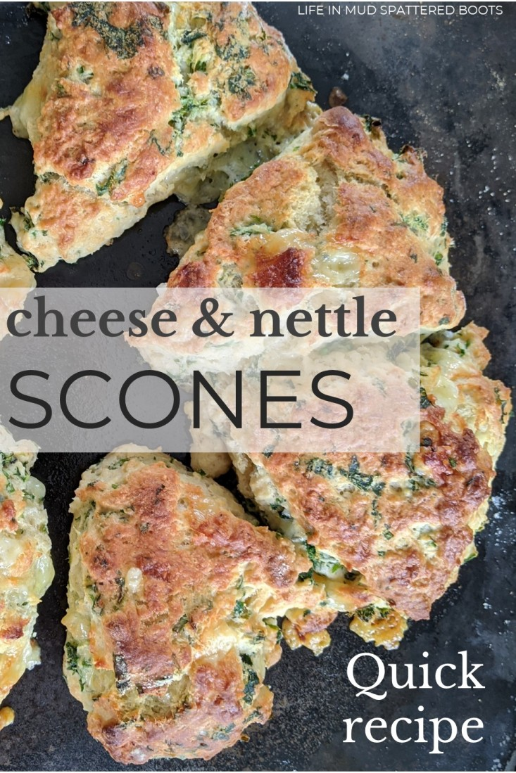 Cheese and nettle scones