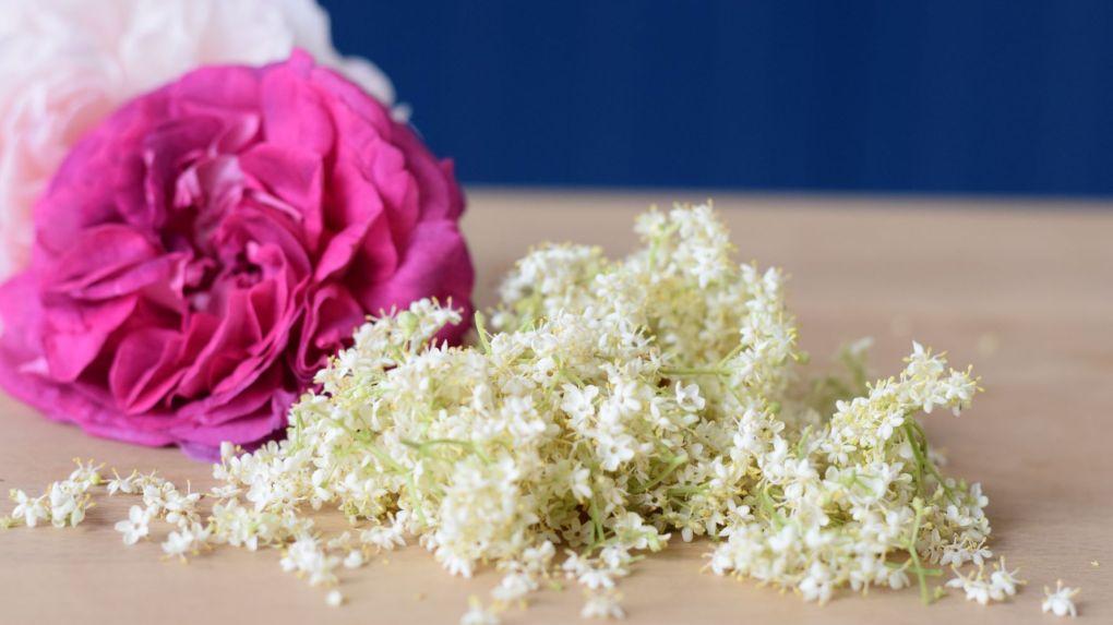 elderflowers and roses
