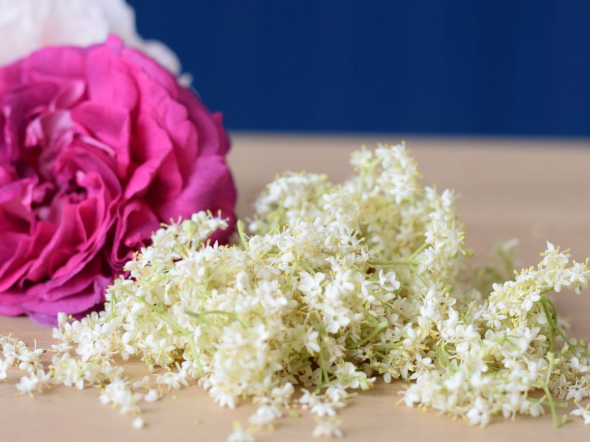 elderflowers and roses