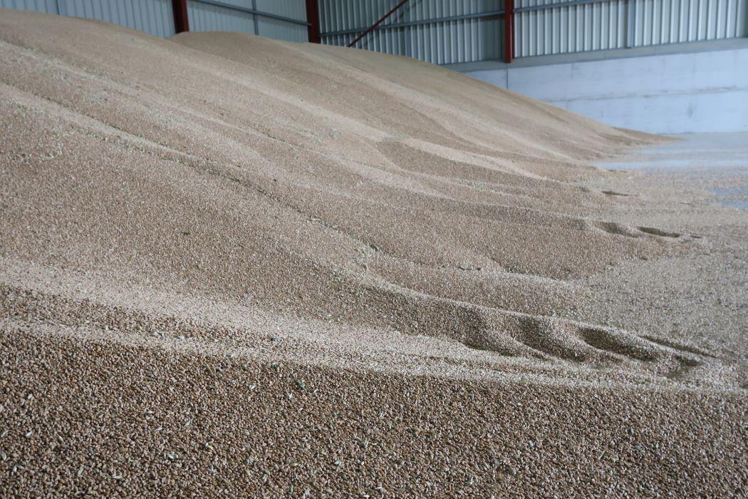 heap of wheat in barn