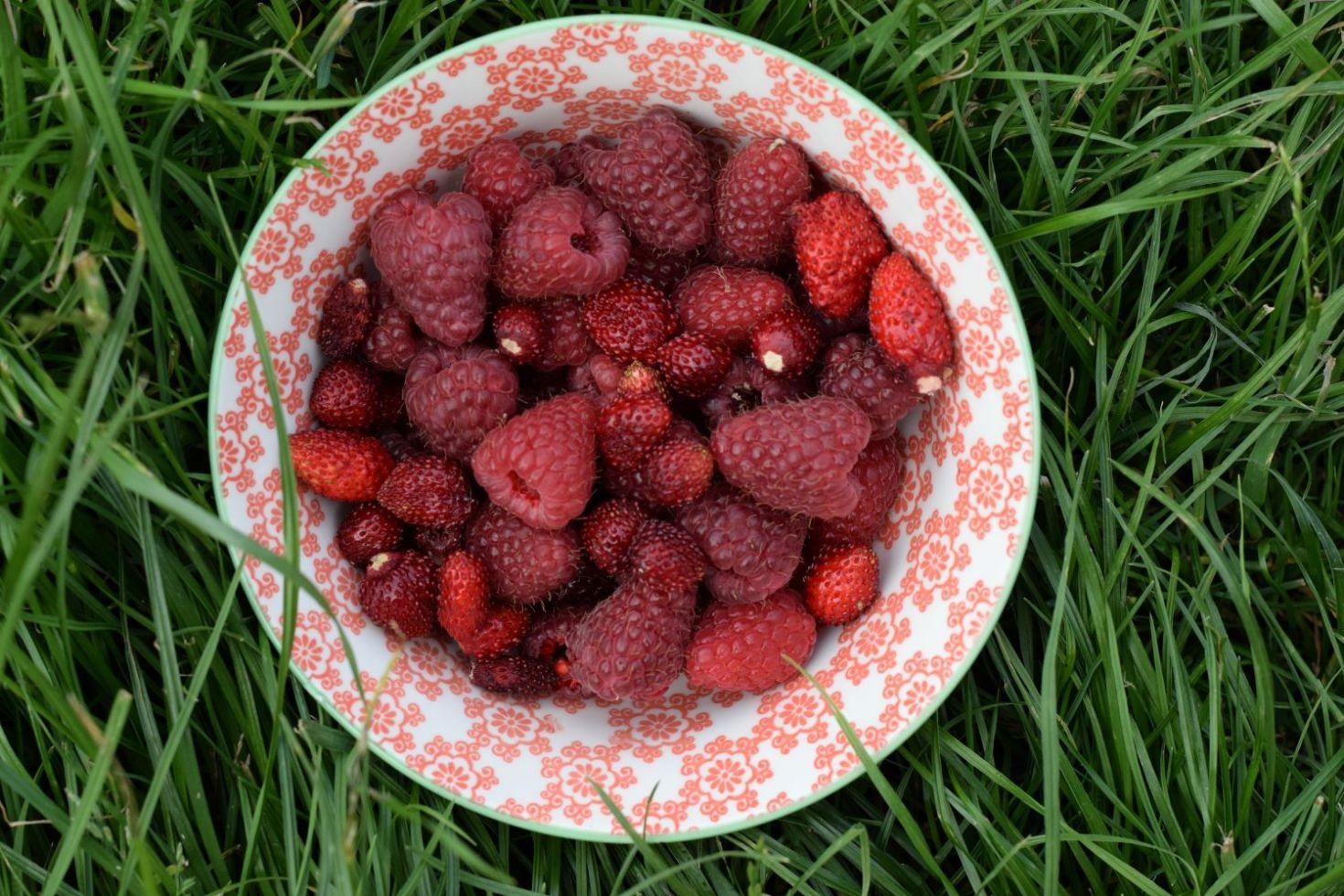 bowl of Raspberries and alpine strawberries