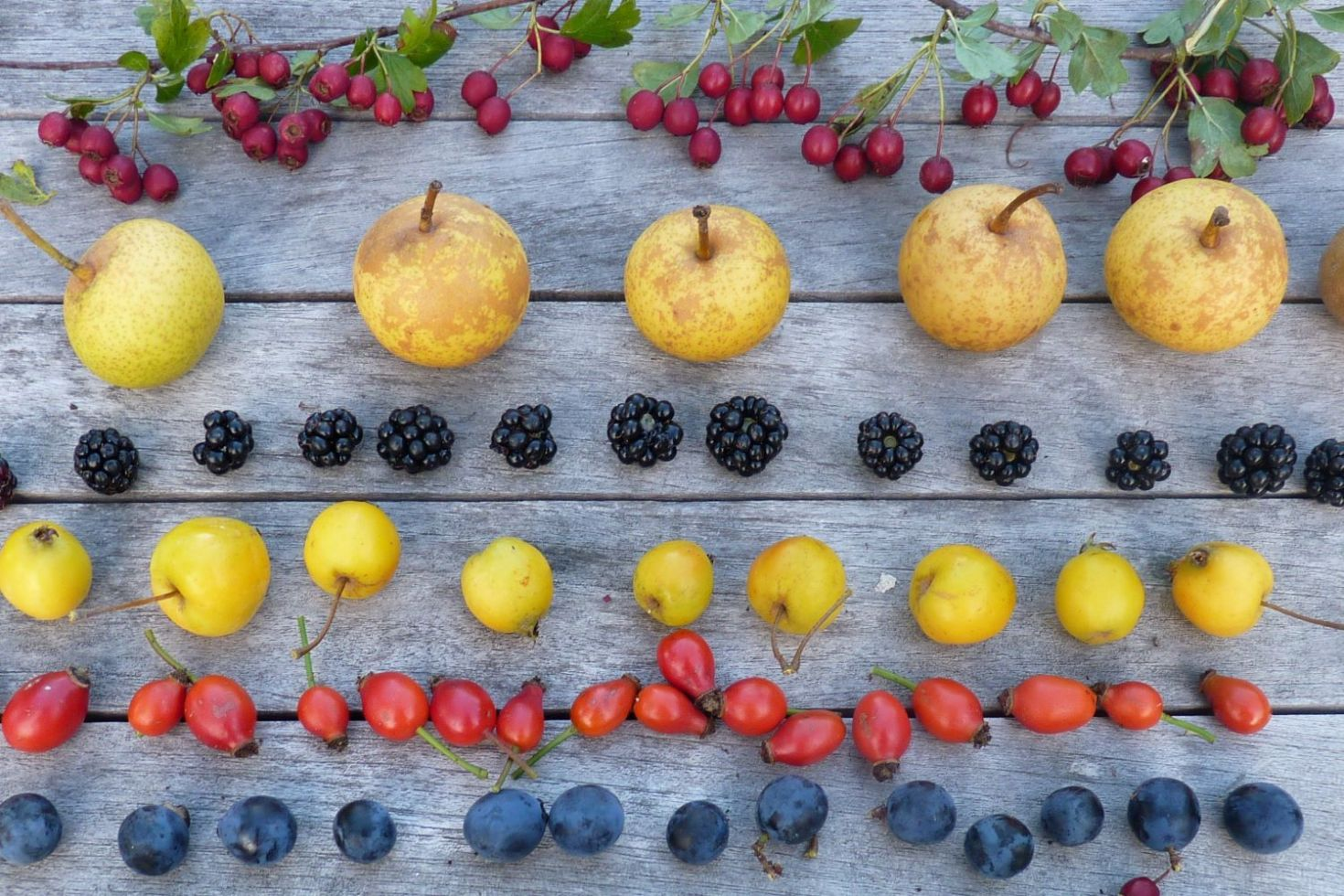 haws, wild pears, blackberries, crab apples, rosehips and sloes laid out on table