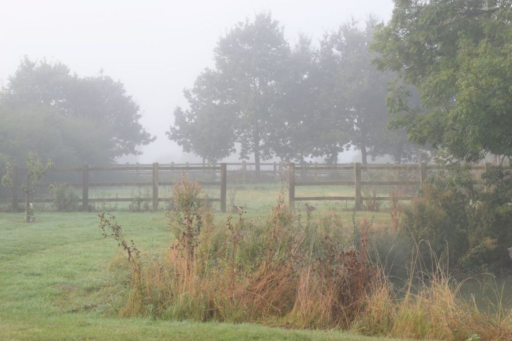 tree and pond in autumn mist