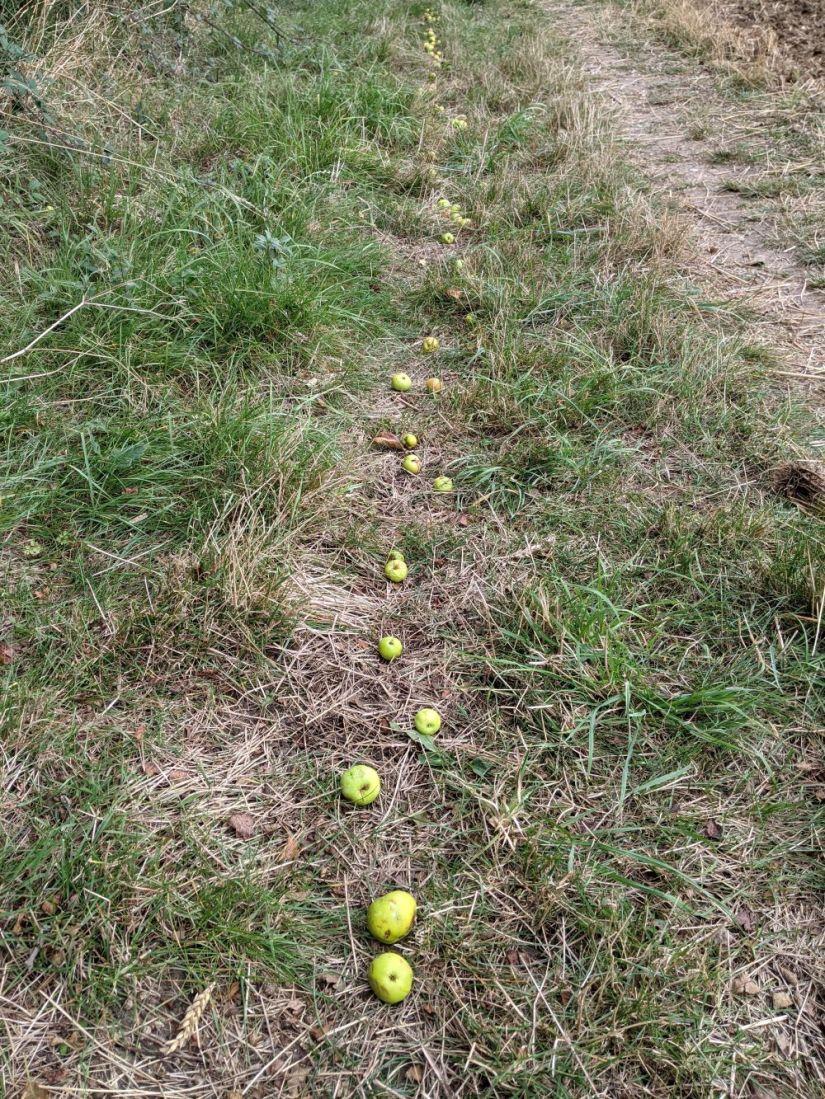 crab apple trail