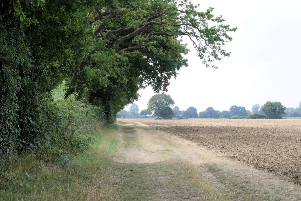path next to arable field in late summer
